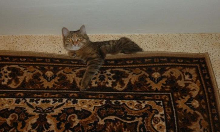 Кошачьи домики, которые идеально впишутся в интерьер